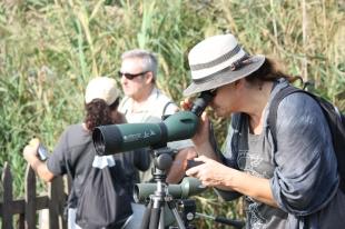 Excursión Ornitológica por el Estany de Cullera
