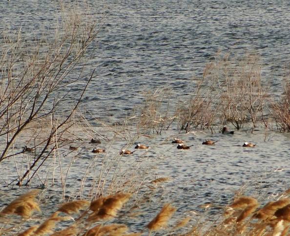 Laguna de Ontalafia. Foto: Rafa Torralba