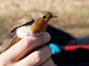 Día Mundial de las Aves 4