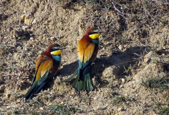 Día de las Aves Migratorias