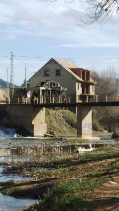 Noria Casas del Río (foto archivo ACTIO Birding)