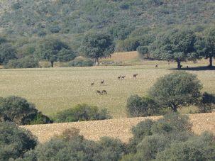 Sierra del Relumbrar y Estrecho del Hocino3