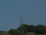 Aguila culebrera en Els Ports