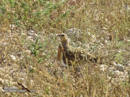 Llanos de Albacete 8