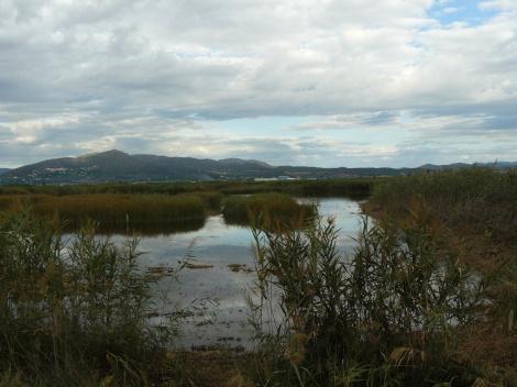 Birding Marjal dels Moros Wetlands