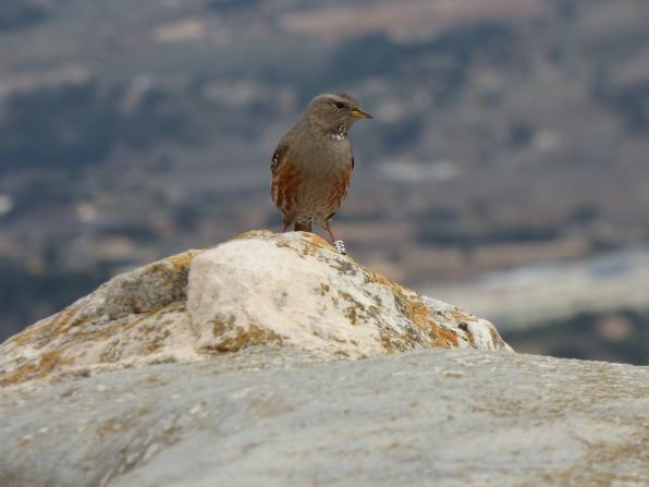 Excursiones a medida Actio Birding 9