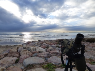 Excursiones a medida Actio Birding 4