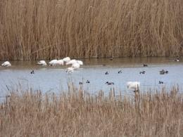 Excursiones a medida Actio Birding 2