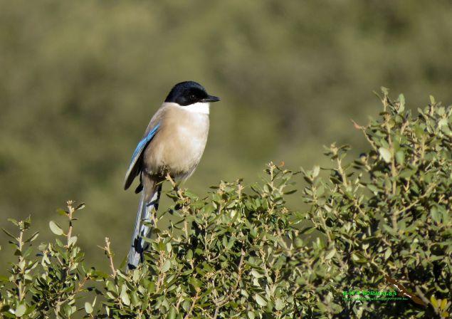 turismo ornitológico Valencia