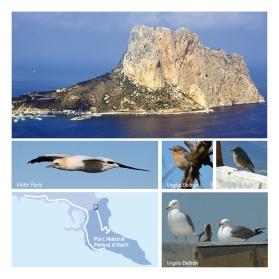 Folleto Birding CALPE- Ruta 4