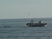 Entrada de pesqueros al puerto de Calpe